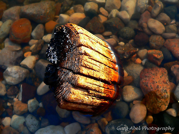 drift-wood-Courtesy of Greg Abel Photography