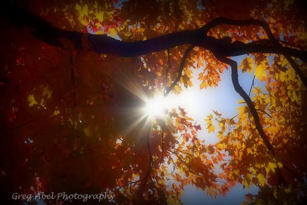 let-the-sun-shine-M